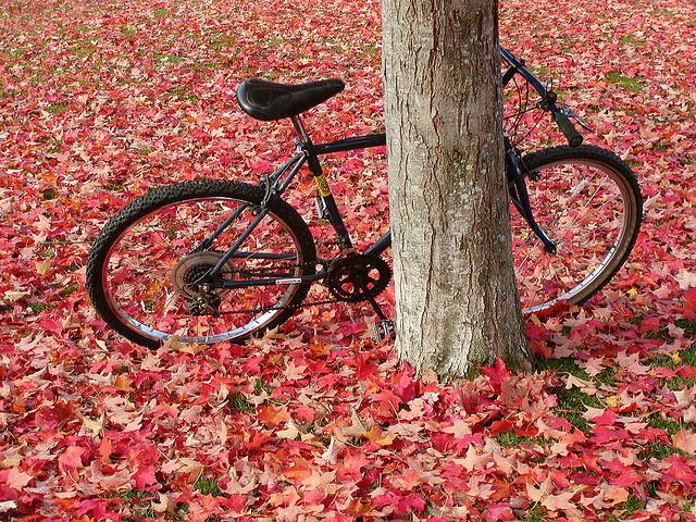 jesen-lisce-002