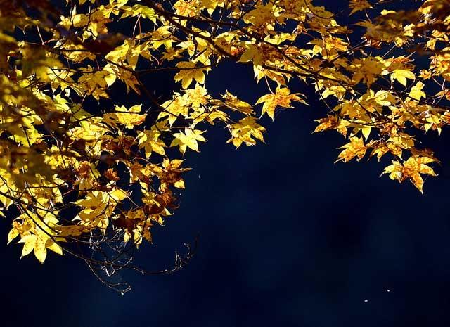 jesen-lisce-009