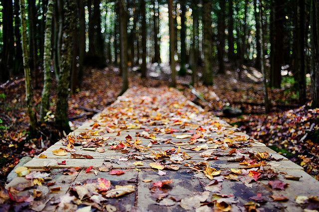 Godišnje doba koje nas smiruje - jesen! (Foto: lee/Flickr.com)